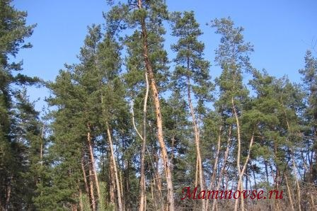 Что расскажет нам лес?